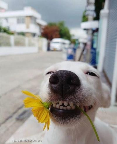 funny_dog_04.jpg