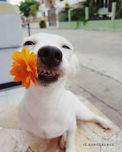 funny_dog_03.jpg