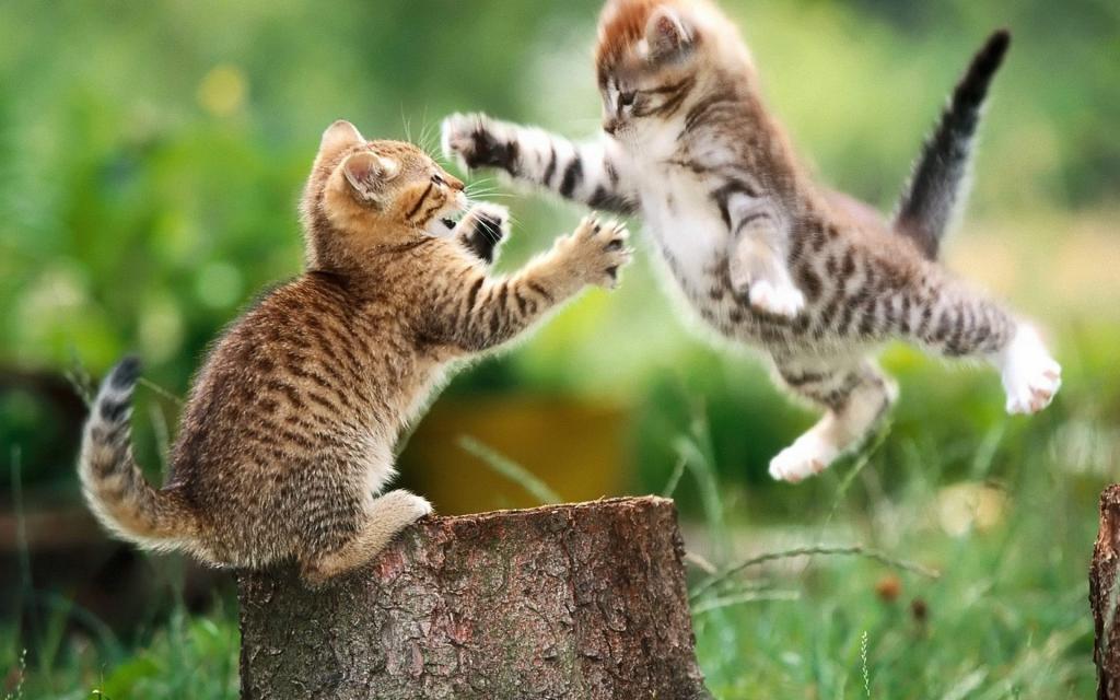 10 лайфхаков, как развлечь кошку: жить играючи!