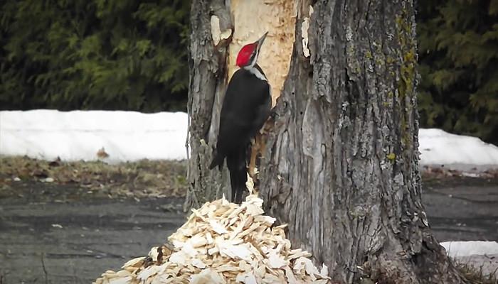 fun-woodpecker.jpg
