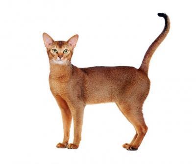 cats-paradise-net_1_webmixerdetailed_jpg.jpg