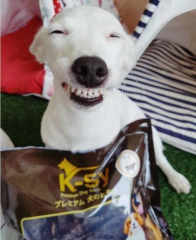 funny_dog_02.jpg