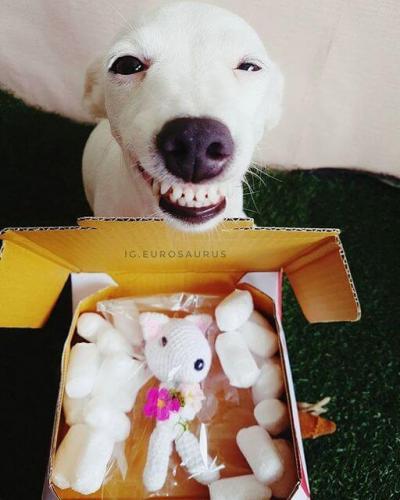 funny_dog_01.jpg